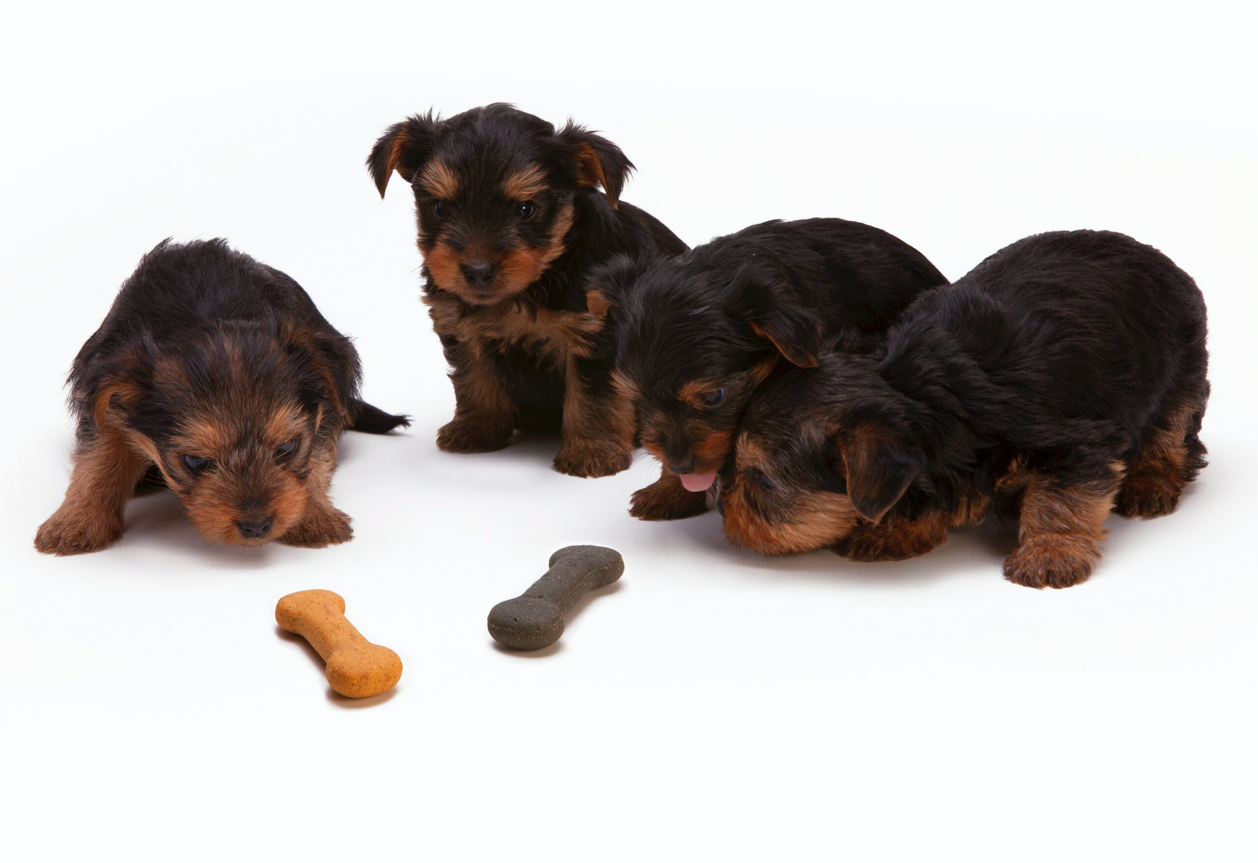 25-curiosidades-que-você-não-sabia-sobre-o-seu-cachorro-filhotes