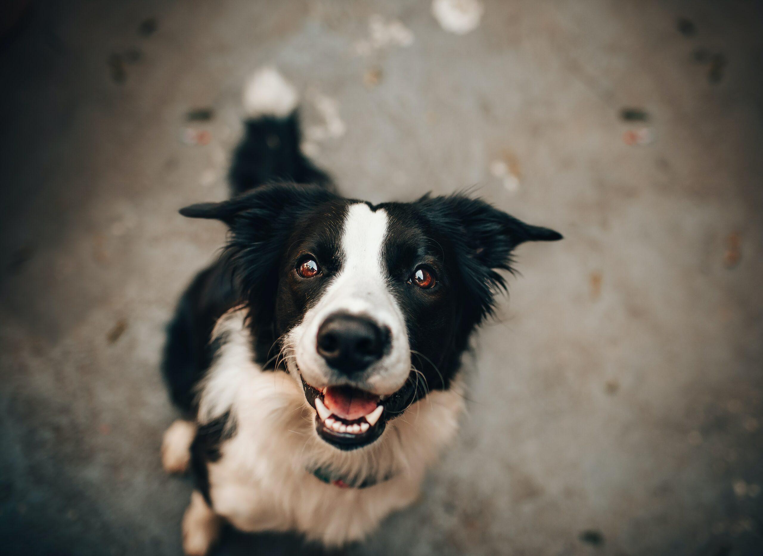 25-curiosidades-que-você-não-sabia-sobre-o-seu-cachorro-dentes