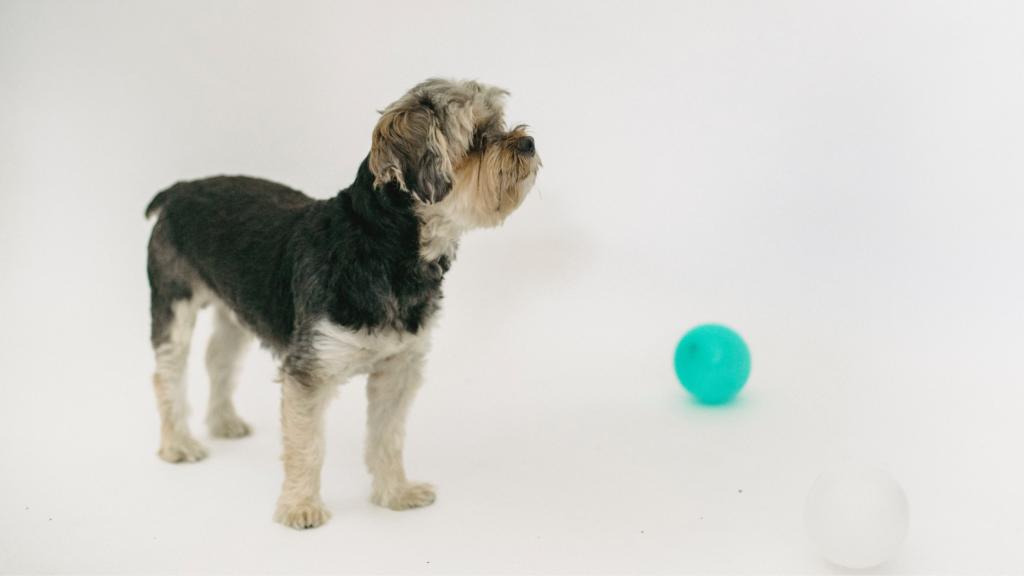 Veja-algumas-maneiras-de-se-exercitar-com-o-seu-cachorro-balão