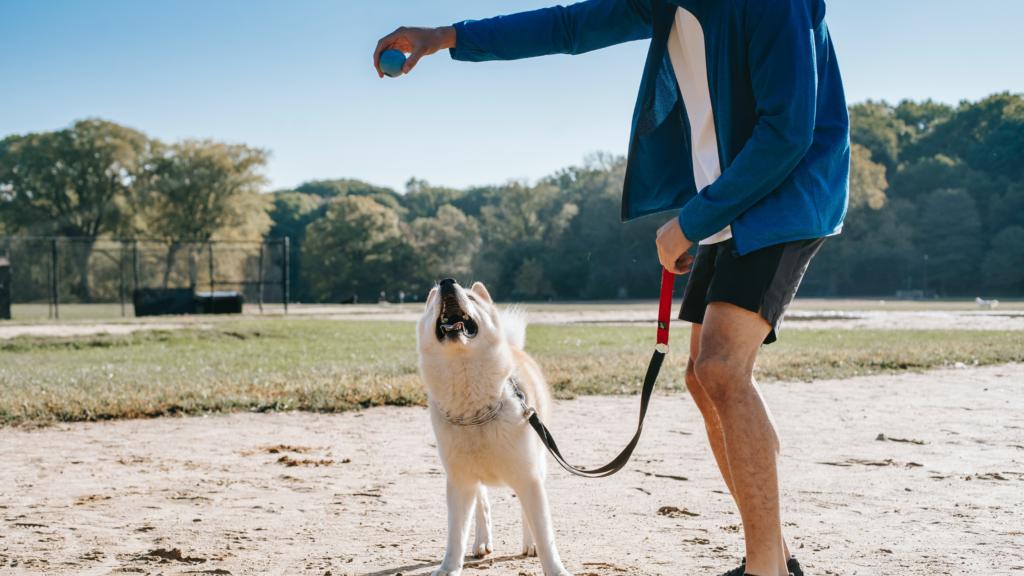Veja-algumas-maneiras-de-se-exercitar-com-o-seu-cachorro-bolinha