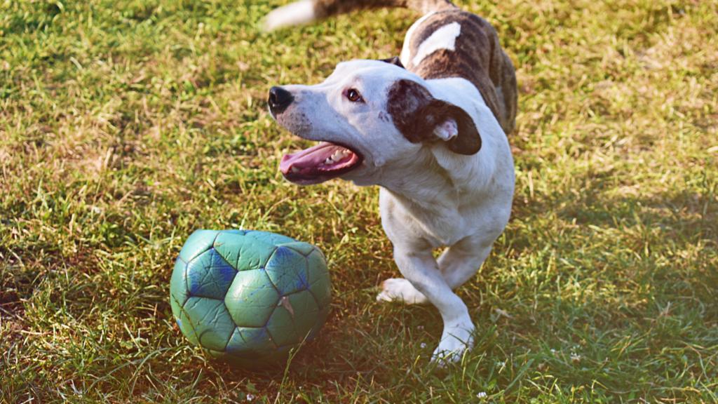 Veja-algumas-maneiras-de-se-exercitar-com-o-seu-cachorro-futebol