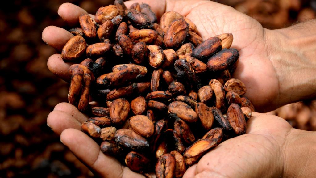 12-curiosidades-sobre-o-chocolate-que-você-não-sabia-cacau