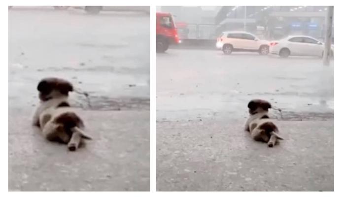 Cachorrinho-se-deita-para-ver-a-chuva-cair-no-meio-de-uma-tempestade-e-cena-viraliza-na-internet
