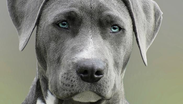 Estudo-revela-que-cães-conseguem-identificar-maldade-na-alma-das-pessoass